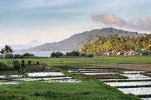 Gunung Tondano dengan pemandangan hamparan sawah yang indah di Sulawesi Utara